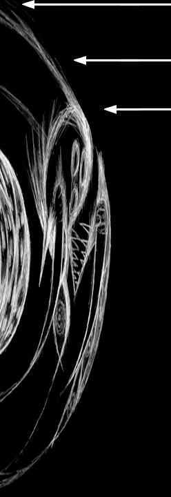 cg.jpg (259×574)